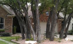Xeriscape Desert example #2